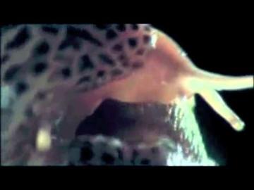 The Growlers - Salt On A Slug